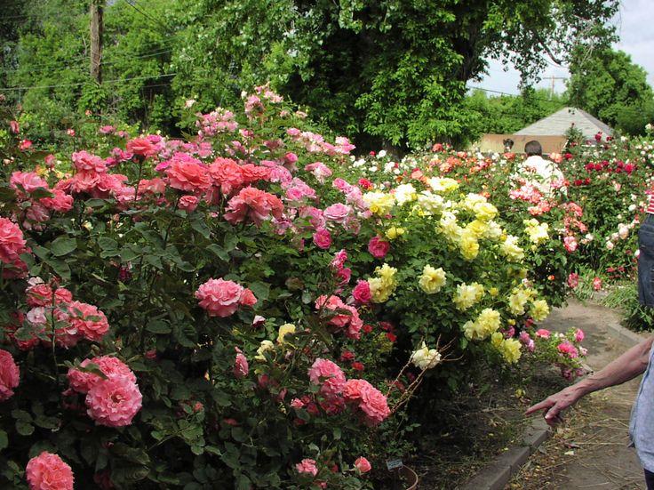 excellent best images about sidewalk garden ideas on pinterest angel with rose garden design ideas