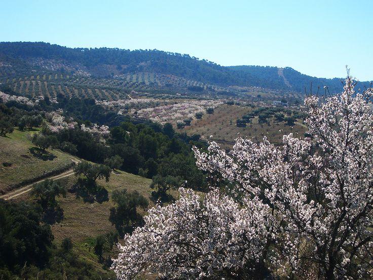 Springtime en route from Alhama de Granada to Granada