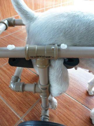 cadeira de rodas para caes 16