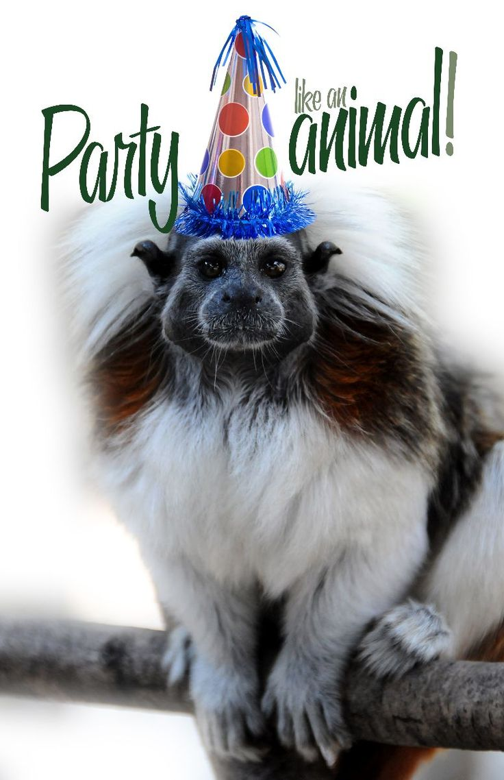 12 Best Images About Birthdays On Pinterest Birthdays Animals Wishing Happy Birthday