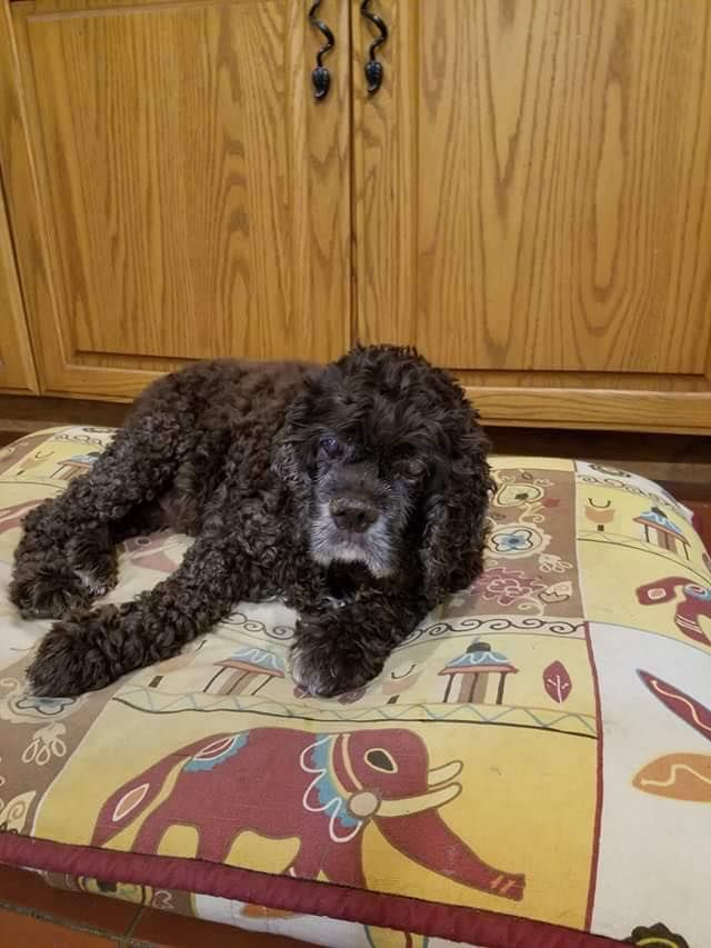 Town of Willington Animal Control Page Liked · Yesterday ·   ***BOLO*** Missing older Cocker Spaniel from Clint Eldredge Rd in Willington since the morning of 11/26. If you have any info, please contact his owner at 860-208-0565 or WAC at 860-428-4422
