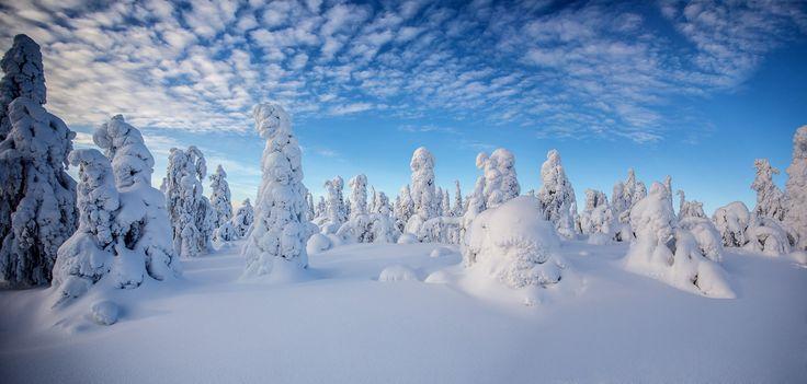 Pallas-Yllästunturi National Park Lapland