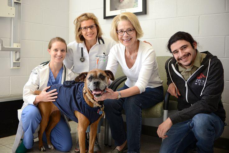 Sophie Underwent A Cardiac Ablation Procedure In A Perelman School