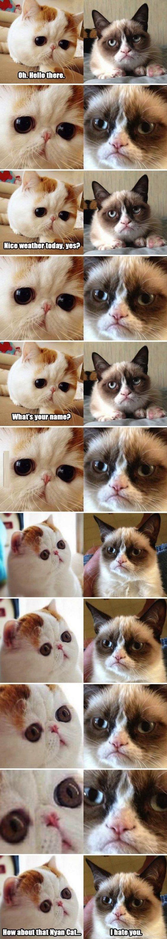 Snoopy Cat Meets Grumpy Cat.... How I feel when I talk to arlene hahahahah! @Arlene Nguyen @Nancy Lam @Jessica Phan