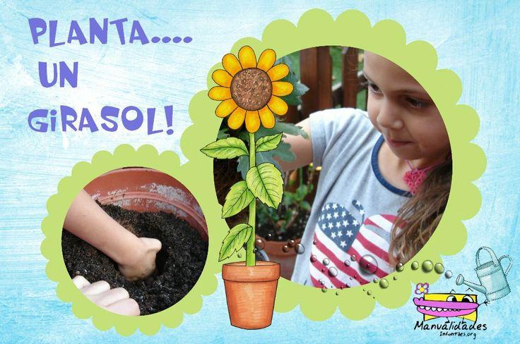 C mo plantar un girasol una actividad muy gratificante for Cuales son las partes de un periodico mural