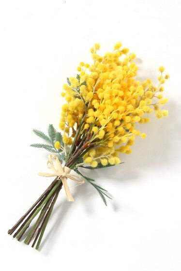 the 25 best mimosa plant ideas on pinterest flowers colorful flowers and flora. Black Bedroom Furniture Sets. Home Design Ideas