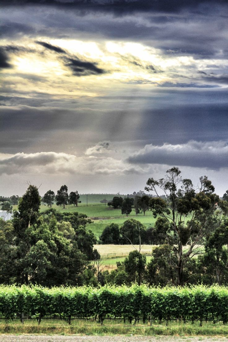 Yarra Valley Australia - a feast for the senses! www.marysvilletourism.com