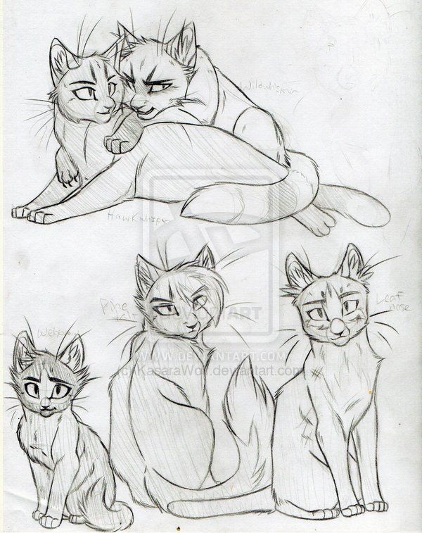 how do you draw a warrior cat | Warrior Cats Set 18 by *KasaraWolf on deviantART