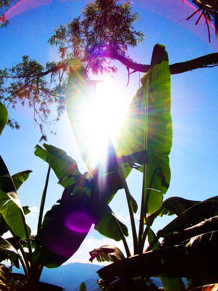 El Sol abriendo paso entre Plataneras, Finca la Miranda, Quindío.