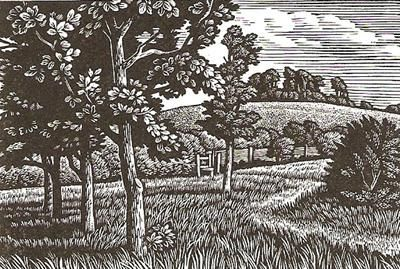 Wittenham Clumps by Howard Phipps (wood engraving)