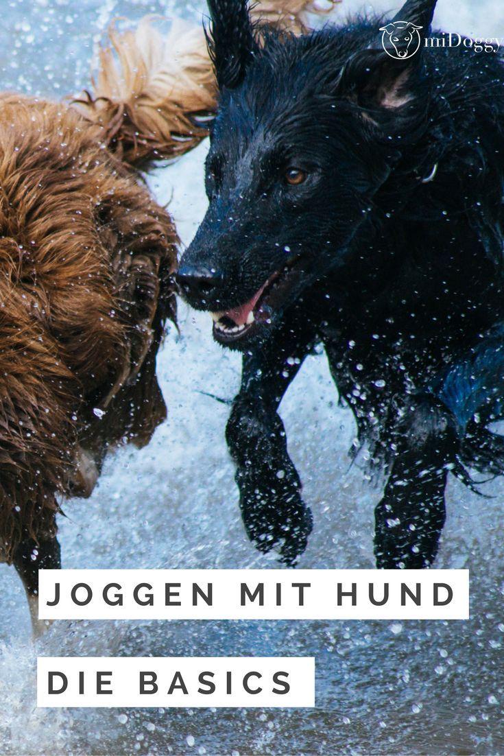 Hier erfährst du alles, was du beim Joggen mit Hunden wissen solltest.