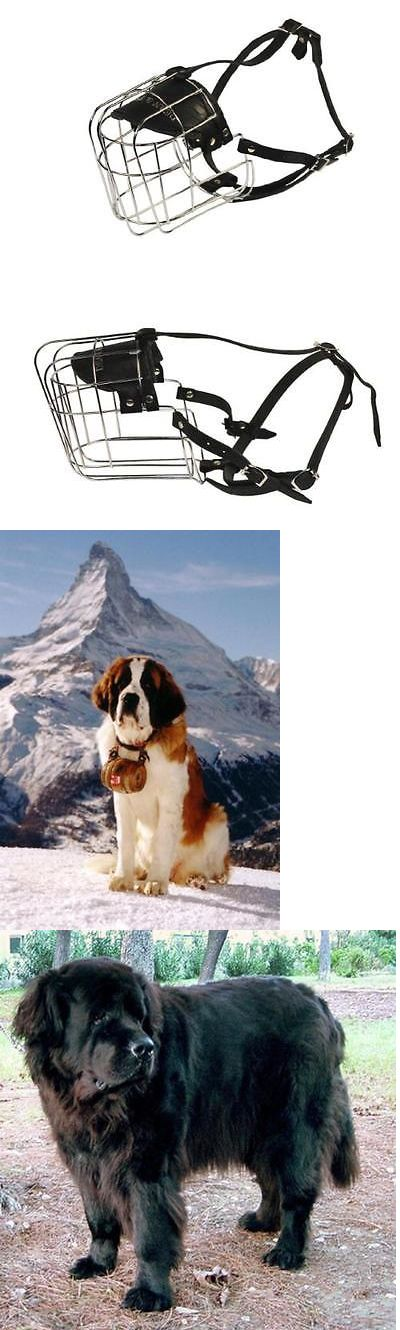 Muzzles 66784: Dean And Tyler Wire Basket Muzzle, Size No. 12 - Saint Bernard, New, Free Shippi -> BUY IT NOW ONLY: $67.87 on eBay!