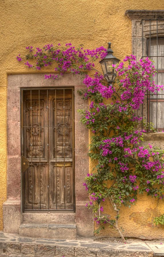 Breathtaking Bougainvillea Photograph by Lindley Johnson - Breathtaking Bougainvillea Fine Art Prints and Posters for Sale