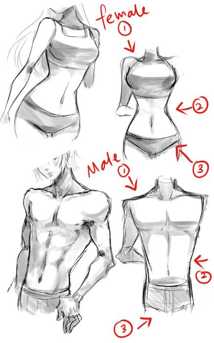 Typical female and male body tips by Neire-X.deviantart.com on @deviantART