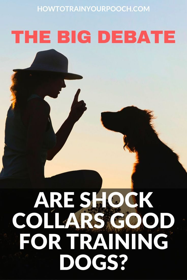 If You Need To Train Your Dog And You Ve Heard About Shock Collars