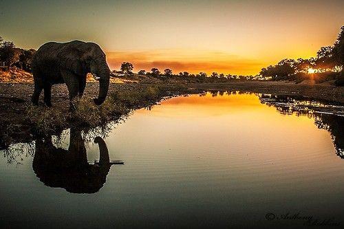 (via 500px / Elephant Sunset by Anthony Robbins)