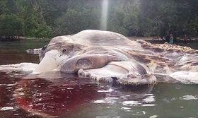 Μυστήριο με τεράστιο κουφάρι τέρατος που ξέβρασε η θάλασσα (PicsVid)   Πρόκειται για ένα γιγαντιαίο καλαμάρι ή μια κανονική φάλαινα; Αυτό είναι το ζήτημα που προκαλεί σύγχυση σε ερευνητές στην Ινδονησία  from Ροή http://ift.tt/2qcs9qo Ροή