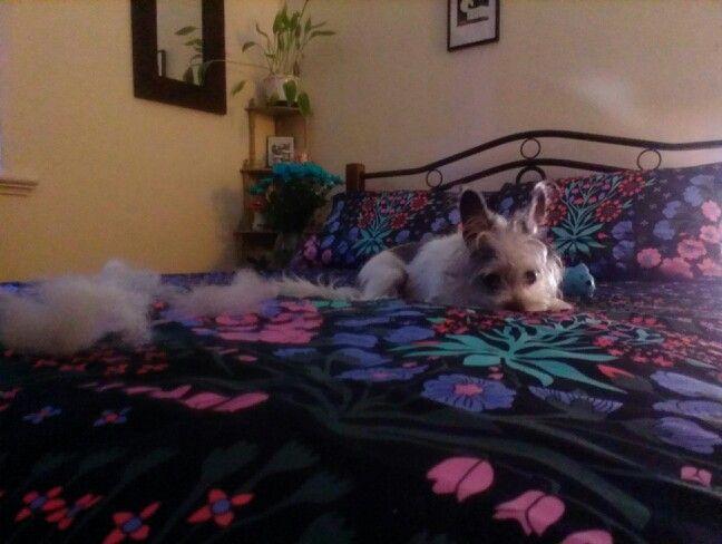 Destroyed dog toy #crimescene #murder #regret
