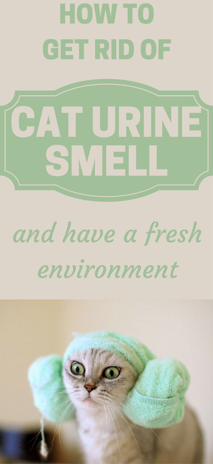 how-to-get-rid-of-cat-urine-smell-and-have-a-fresh-environment