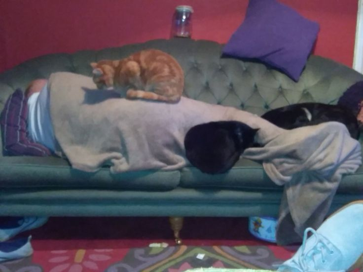 Pets grabbing the heat from Hubby lol