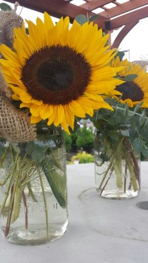 Sunflowers in mason jars with burlap bow