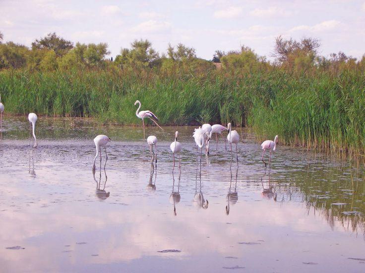 Itinerario di viaggio alla scoperta delle meraviglie della Camargue: in tenda tra fenicotteri rosa, cavalli bianchi, tori e girasoli.