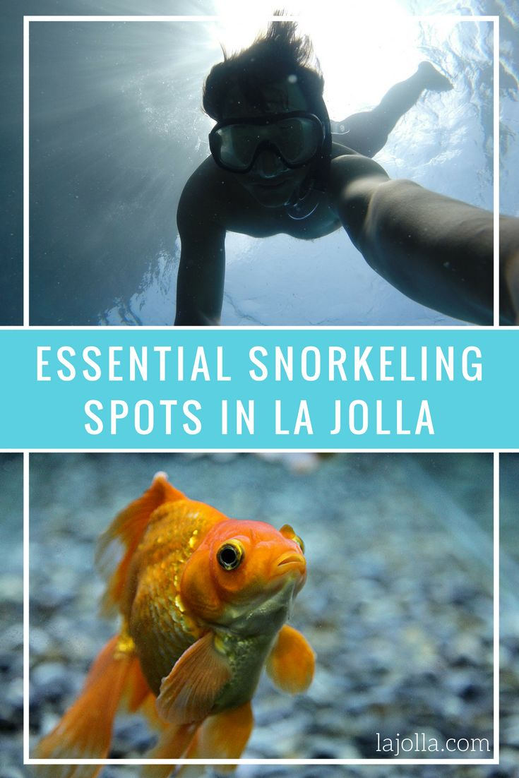 Here are our recommendations for the best places to go snorkeling in La  Jolla.