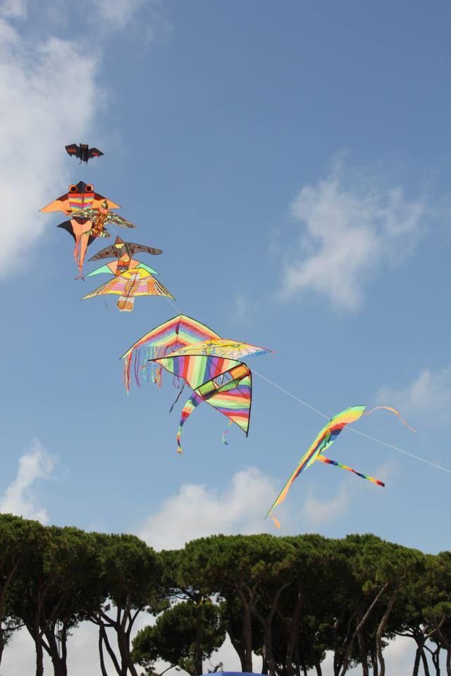 Hotel la Pineta  Aquiloni Kites