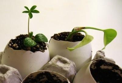 Husk: plante karse i eggeskall til påke :)