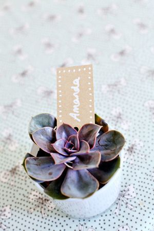 Miniature potted wedding succulent - beautiful favour especially for an eco-style wedding