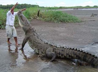 Best Giant Reptiles Images On Pinterest Car Jokes And Lemon - Meet worlds largest crocodile caught philippines
