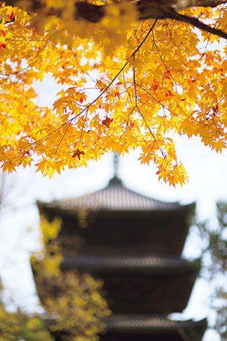 【2017】京都の紅葉名所、全25スポット!見頃やライトアップ情報も!