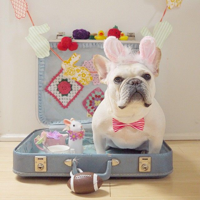 'Happy Easter', French Bulldog in Bunny Ears