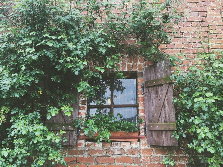 Window. #photo #photography #nature