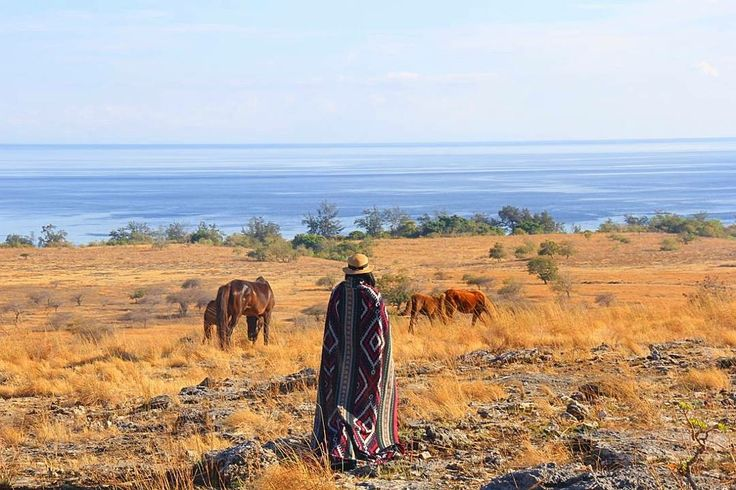 Panorama alam berupa savana berwarna kuning keemasan dibalut dengan birunya langit  serasa berada di alam Afrika bisa kalian temukan di Puru Kambera,  Sumba Timur.  Next Trip Pulau Sumba : 21 - 25 September 04 - 08 Oktober ( Special Trip With Marischka Prudence & Ferry Rusli ) 19 – 23 Oktober 16 – 20 November 30 November – 4 Desember 22 – 26 Desember  Start : Tambolaka  Finish : Waingapu  Itinerary >> http://bit.ly/OpenTripPulauSumba . . For details/private WA 082213546018
