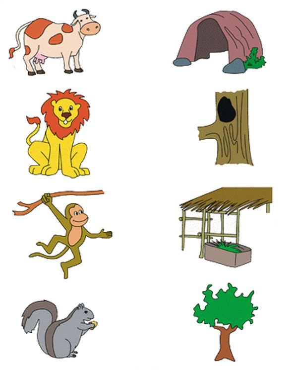 найди дом животного