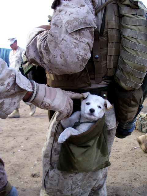 A small puppy wandered up to U.S. Marines from Alpha Company, 1st Battalion 6th Marines, in Marjah, Afghanistan. After following the Marines numorous miles, a soft hearted Marine picked the puppy up and carried the puppy in his drop pouch. (Official U.S. Marine Corps photo by Cpl Charles T. Mabry II)
