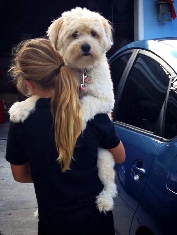 She told me Keva, our whoodle, was too tired to walk.  I believe she was too huggable to put down.... Love our pup.