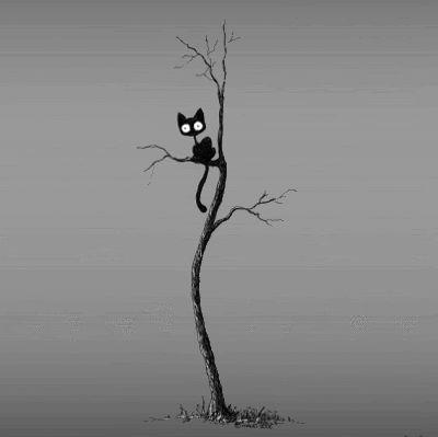 Live-Fotos – Black Cat