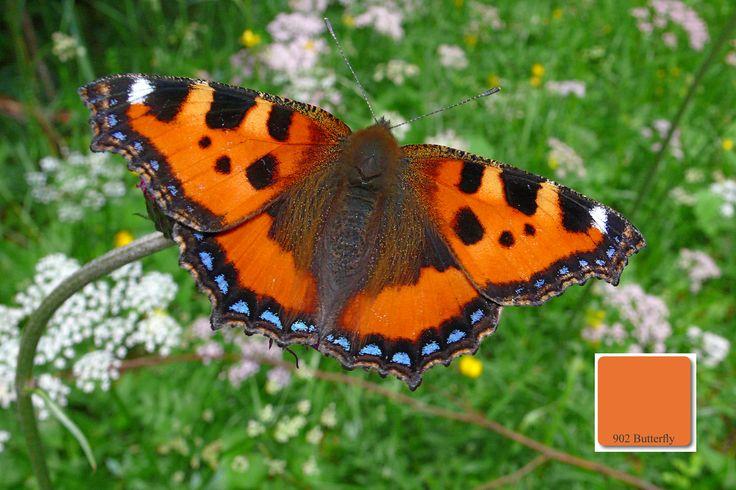 Farbton No. 902 der apprico Colours: Butterfly (Element Feuer) #appricoColours #fengshui