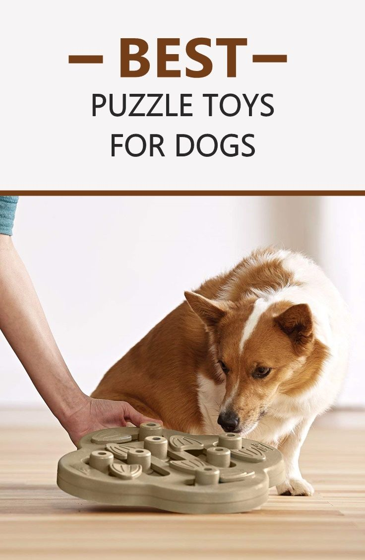 Interactive Dog Puzzles Are Great To Mentally Stimulate Your Pup