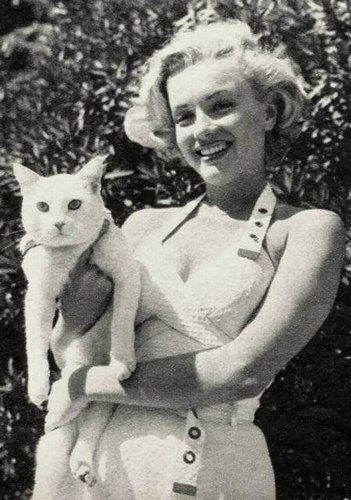 Marilyn Monroe et son chat blanc #chat --- verlina.com