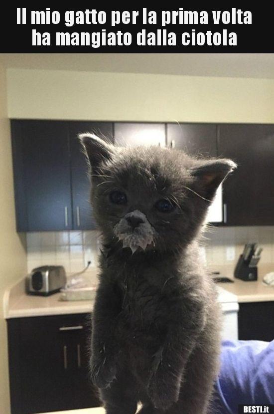 Il Mio Gatto Per La Prima Volta Ha Mangiato Dalla Bestiit