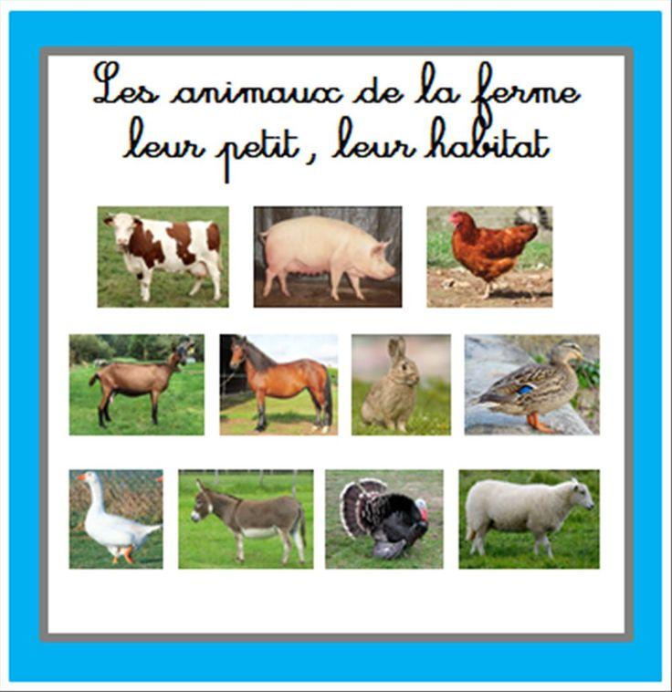 Nous continuons sur notre projet animaux avec, pour cette période, la ferme … Voici donc les images classifiées et renseignées dans lesquelles vous trouverez…