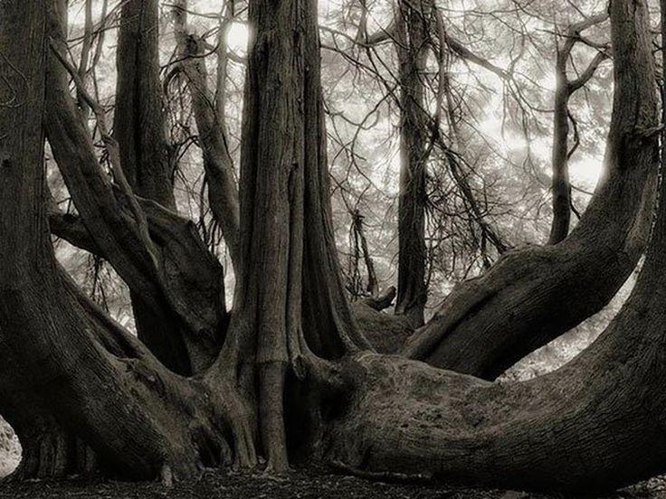 Diese Sammlung der ältesten Bäume der Erde wurden innerhalb von 14 Jahren von der San Francisco, ansässigen Fotografin Beth Moon gesammelt. Moon reiste um die Welt auf der Suche nach den ältesten Bäumen der Erde. ''Viele der Bäume die ich fotografierte überlebten weil sie ausserhalb der...