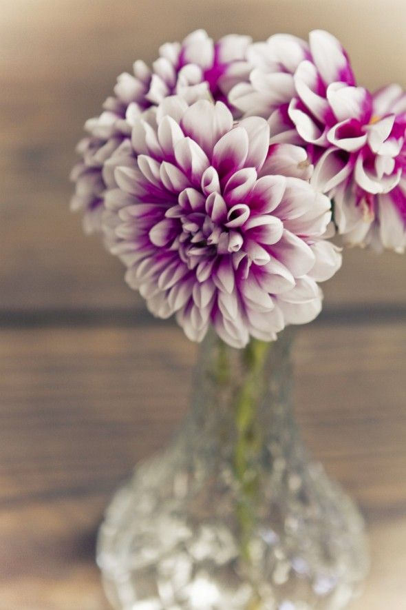 This hint of magenta in this divine flowers make the most amazing simple centrepiece. I just love it! Purple Wedding Flower Centerpieces
