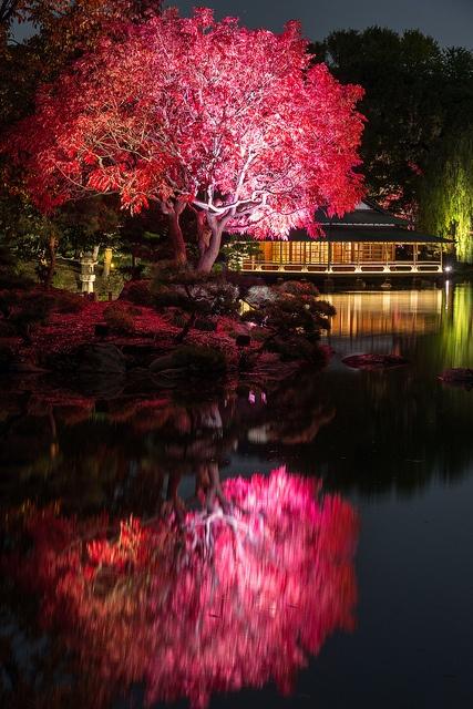 清澄庭園ライトアップ