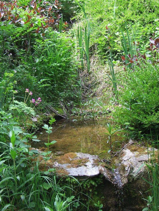Le Jardin d'eau, lieu paisible à la végétation luxuriante