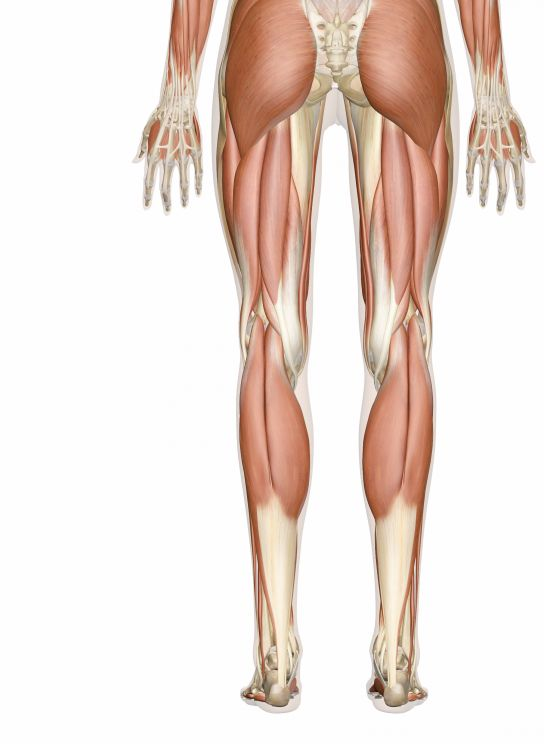 Glut muscles - low back leg and hip pain