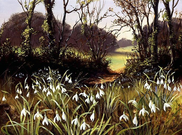 Mary Dipnall — Snowdrops